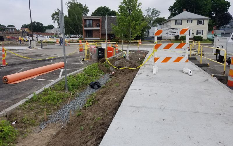 Tree installation along Greenwood Ave near Wollaston Station
